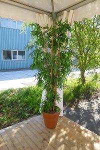 plantdecoratie bamboe