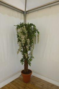plantdecoratie bougainville geel